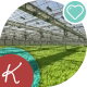 The Vast Field Sown Lettuce In The Greenhouse - VideoHive Item for Sale