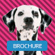 Pet Shop Trifold Brichure - GraphicRiver Item for Sale