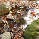 Autumn Forest Stream - VideoHive Item for Sale