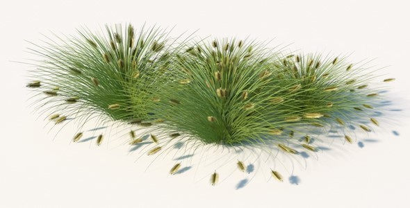 Lowest Poly- Fountain Grass - 3DOcean Item for Sale
