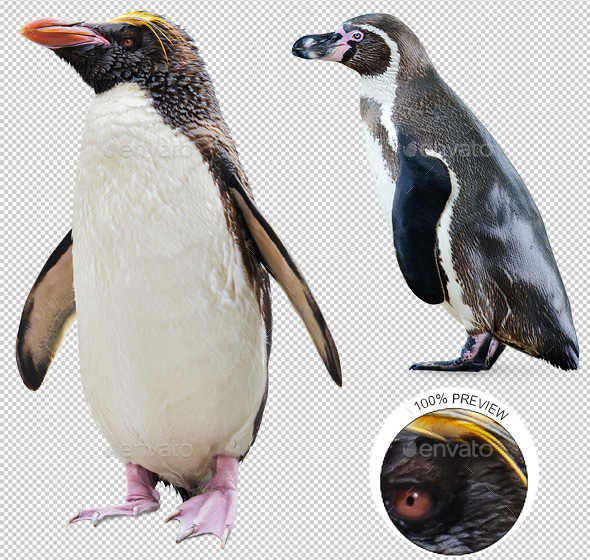 Two Penguins - Nature & Animals Isolated Objects