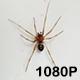 Spider Struggles to Escape Sink - VideoHive Item for Sale