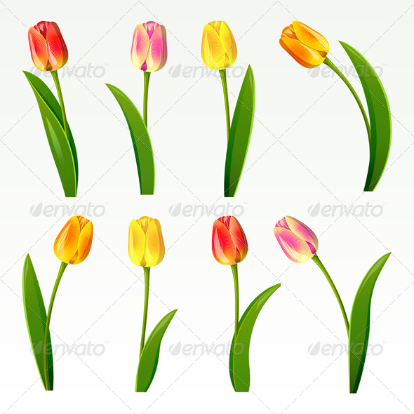 Tulips  - Flowers & Plants Nature
