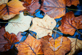 Autumn Leaves on water - PhotoDune Item for Sale