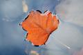 Leaf of water - PhotoDune Item for Sale