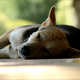Sleeping Dogs - VideoHive Item for Sale