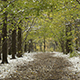 Snowstorm in the Autumn Forest - VideoHive Item for Sale