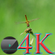 Dragonfly on Flower - VideoHive Item for Sale