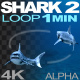Shark 2 Loop - VideoHive Item for Sale