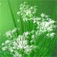 Fresh Spring Logo Reveal  - VideoHive Item for Sale