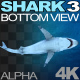 Shark 3 Bottom View - VideoHive Item for Sale