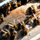Busy Bees at the Beehive in the Sunlight - VideoHive Item for Sale