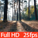 Sunlight Through Trees in Park - VideoHive Item for Sale