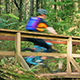 Cyclists Ride Over Wooden Bridge In Forest - VideoHive Item for Sale