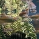 Aquarium Fish Swim Underwater - VideoHive Item for Sale