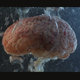 Brain in a Water Tank with Oxygen - VideoHive Item for Sale