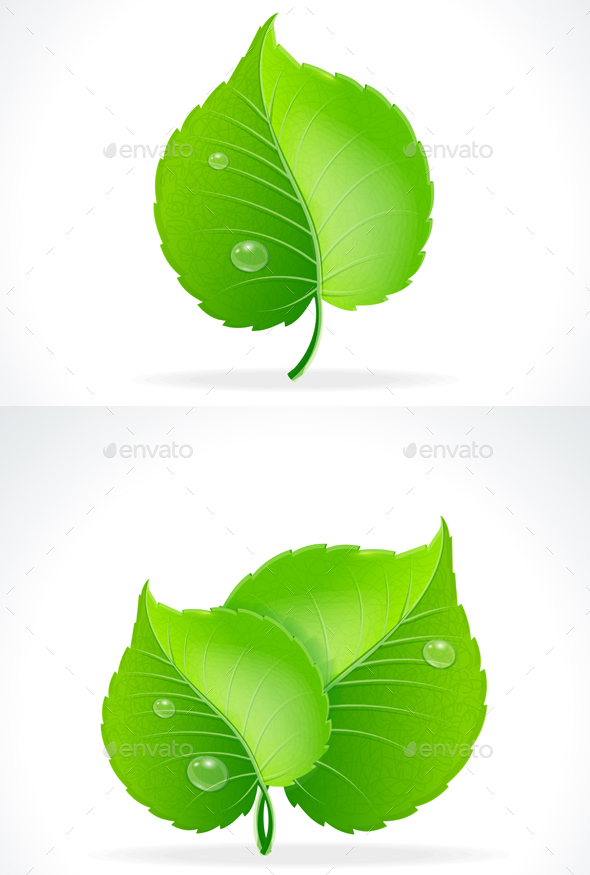 Glossy Green Detailed Leaves. Vector - Objects Vectors