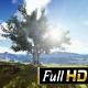 Big Tree Sunrise - VideoHive Item for Sale
