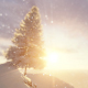 Fir on Snowy Mountain - VideoHive Item for Sale