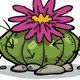 Cactus Collection - GraphicRiver Item for Sale
