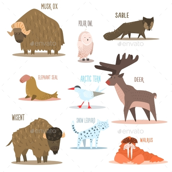 Arctic and Antarctic Animals - Animals Characters