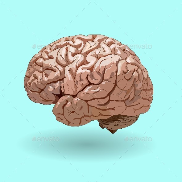 Realistic Human Brain on a Blue Background . - Health/Medicine Conceptual
