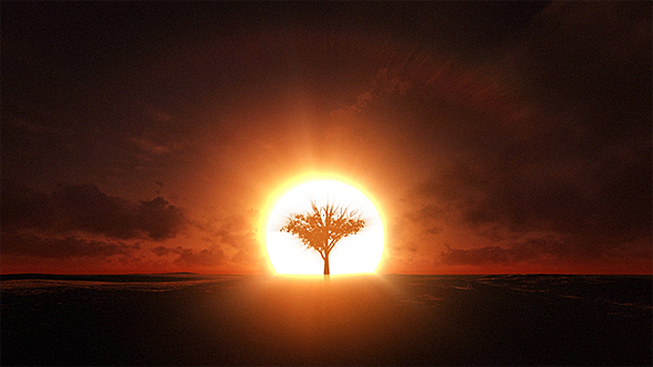 growing tree silhouette at sunrise by se5d