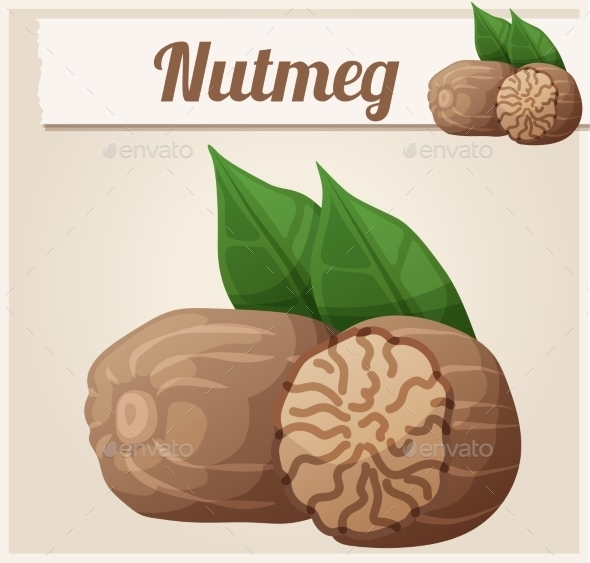 Nutmeg. Detailed Vector Icon - Food Objects