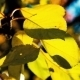 Autumn. Yellow Leaves On a Tree - VideoHive Item for Sale