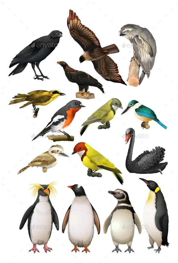 Different Kind of Birds - Animals Characters