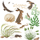 Steppe Plants and Animals Set - GraphicRiver Item for Sale