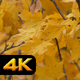 Yellow Autumn Leaves - VideoHive Item for Sale