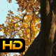 Autumnal Tree - VideoHive Item for Sale