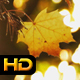 Yellow Autumn Leaves and the Sun - VideoHive Item for Sale