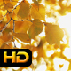 Yellow Autumn Leaves in Sun - VideoHive Item for Sale