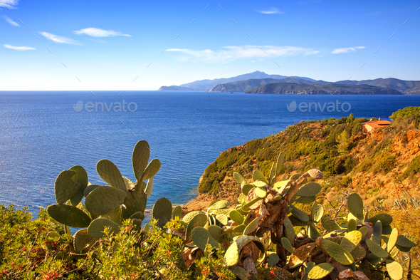 Elba island, cactus indian fig opuntia, coast view Capoliveri Tu - Stock Photo - Images