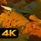 Autumn Leaves on Ground - VideoHive Item for Sale
