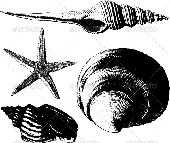 Shells and starfish - Organic Objects Objects