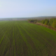 Flying Above Green Field - VideoHive Item for Sale