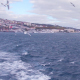 Istanbul Bosphorus Bridge and Seagulls - VideoHive Item for Sale