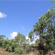 Cut And Uprooted Trees For Clearing Land - VideoHive Item for Sale