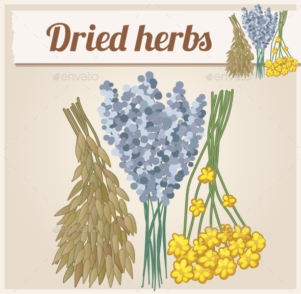 Dried Herbs 2. Detailed Vector Icon - Seasons Nature