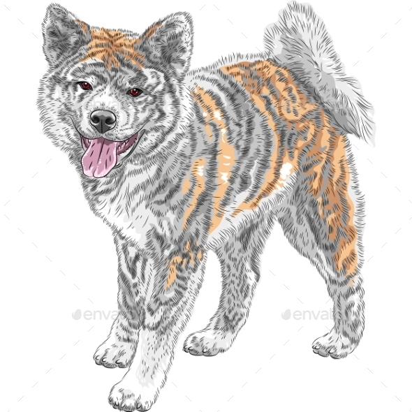 Vector Sketch Dog Akita Inu Japanese Breed Smiles - Animals Characters