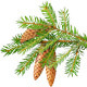 Pine and Fir Trees Branches - GraphicRiver Item for Sale