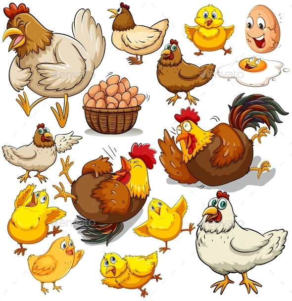 Chicken and Fresh Eggs - Animals Characters