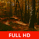 Between the Autumn Trees - VideoHive Item for Sale