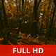 Exploring the Woods - VideoHive Item for Sale