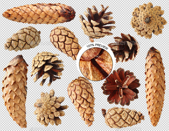 Pine and Fir Tree Cones - Nature & Animals Isolated Objects