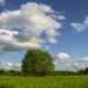 Single Tree On a Summer Meadow  - VideoHive Item for Sale
