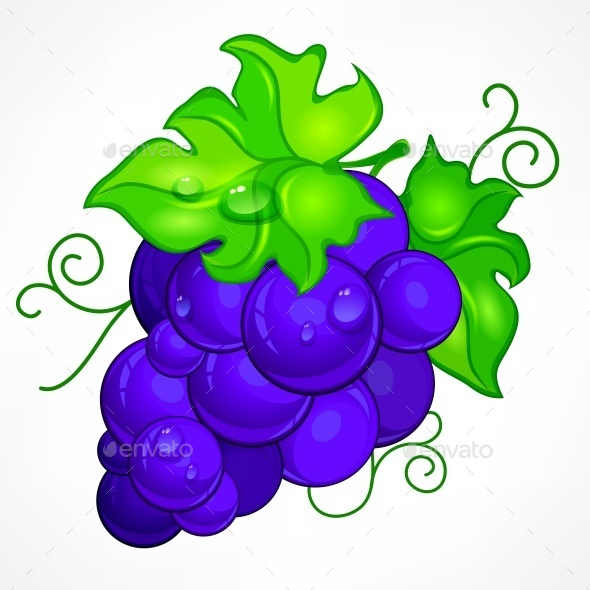 Cluster Blue Grapes on White - Food Objects